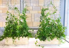 Natural look screens with greenery