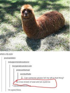 im laughing so hard I'm crying!!!