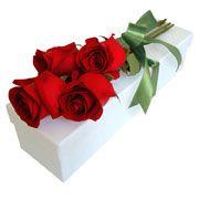 Rosas vermelhas.