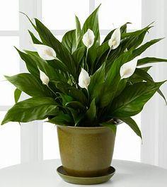 10 Houseplants That Don\'t Need Sunlight | Plants, Houseplants and ...