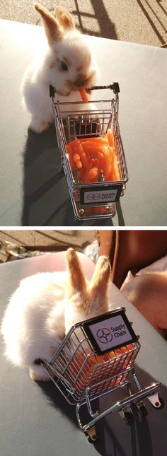 Of course this bunny's shopping cart is filled with carrots