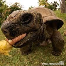 Resultado de imagen para caricaturas de tortugas