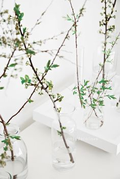 Bring Spring In: 27 Beautiful Greenery Touches For Your Home   DigsDigs