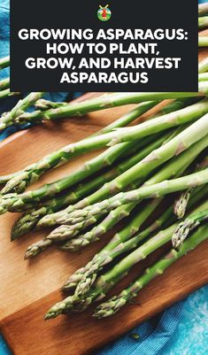 Growing Asparagus: How to Plant, Grow, and Harvest Asparagus