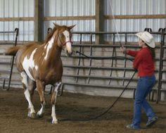 """The First Horse I Refused to Train"" by Stacy Westfall"