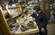 Newly-discovered Siberian dinosaur was as heavy as 7 male African elephants African Elephant, Elephants, History, Historia, African Bush Elephant, Elephant