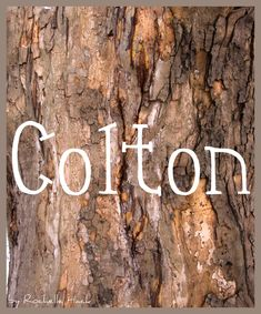Baby Boy Name: Colton. Meaning: Coal Town or Colt Settlement. Origin: Old English. http://www.pinterest.com/vintagedaydream/baby-names/