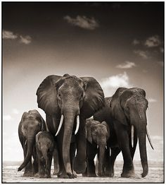 Love Elephants...great black & white pic! #Wildlife The whole family! This is a wonderful pic!