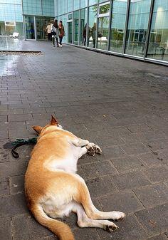 Oriol Bargalló: Fotografía - Waiting