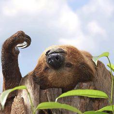 "- ""Comment ça va ?"" - ""Comme un lundi""  #NatGeoWild #picoftheday #nature #monday #wild #wildlife"