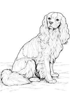 Cavalier King Charles Spaniel Coloring page   DOG art ...