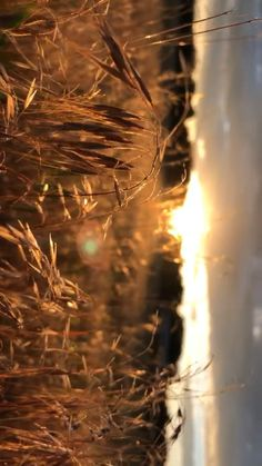 Summer Days 🔆 - Sunsets on the field (sound on) - Sunset Photography, Creative Photography, Landscape Photography, Farm Photography, Photo Background Images, Photo Backgrounds, Photography Captions, Nature Gif, Nature Videos