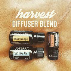 1 drop Wild Orange  2 drops White Fir  1 drop Cinnamon Bark Doterra diffuser blends