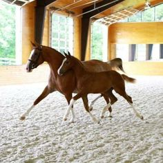 """""""I am completely sold. All my horses are now on Equine Omega Complete."""" Discover the power of supplementing your horse at the cellular level, omega369. Visit the site to enter to win a free month's supply. www.o3animalhealth.com"""