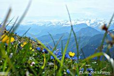 Flor tipica de los Alpes Suizos #photography #photo #photos #picture #pictures #pic #pics #snapshot #art #beautiful #instagood #picoftheday #photooftheday #color #all_shots #exposure #composition #focus #capture #moment