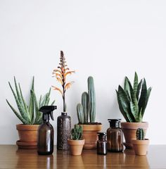 As you may know, I like to mix plants, flowers and bottles together. Here is some styling I did in my home. With Kuishi Home. Brown Bottles, Amber Glass Bottles, Joshua Tree Wedding, Belle Plante, Plants Are Friends, Vintage Bottles, Cactus Plants, Cacti, Soap Dispenser