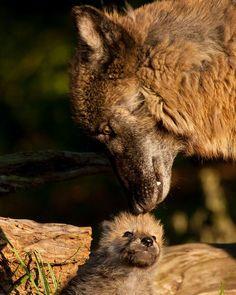"""her-wolf: """" By Jason Hahn """""""
