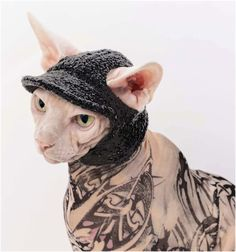 Hat for a Cat! The Kitty Cat Cap Hat in Black Fleece for sphynx cats gentle Velcro, hat they will actually wear everyday or costume