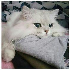 Love cat ❤