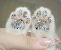 Find images and videos about cat, animal and glitter on We Heart It - the app to get lost in what you love. Rauch Fotografie, Glitter Photography, Glitter Art, Sparkles Glitter, Glitz And Glam, Pink Aesthetic, Aesthetic Pictures, Wall Collage, Crazy Cats