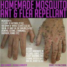 Mosquito, Ant & Flea repellant ...make at home