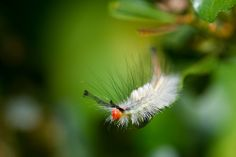 Fuzzy Bug | Flickr - Photo Sharing!