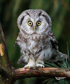 """Owl: """"Oh! You rather startled me Brian! I would prefer if you DIDN'T creep up on me like that!"""""""