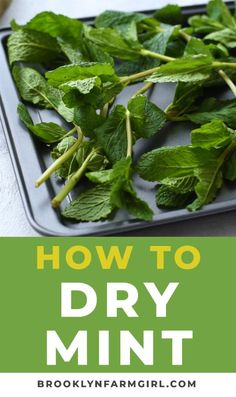 DIRECTIONS on How to Dry Mint Leaves for Tea! These DIY How to Make Mint Tea instructions shows how easy it is to dry your mint plant! Drying Mint Leaves, Fresh Mint Leaves, Uses For Mint Leaves, Mint Leaves Recipe, Fresh Mint Tea, Herb Recipes, Cooking Recipes, Crockpot Recipes, Mint Plants