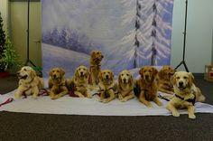 L'humanité des chiens de Newtown. Des chiens apportent une aide affective aux écoliers survivants de l'effroyable massacre de Newtown (Connecticut).  http://www.superception.fr/2012/12/18/lhumanite-des-chiens-de-newtown/