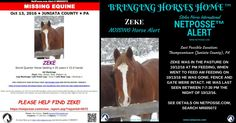 """NetPosse™ Missing Horse Alert for Moons Little Zeke aka """"Zeke""""- Thompsontown (Juniata County), PA https://netposse.com/view_report.asp?reportid=5072 Zeke was in the pasture on 10/12/16 at PM feeding, when went to feed AM feeding on 10/13/16 he was gone. Fence and gate were intact. He was last seen between 7-7:30 pm the night of 10/12/16."""