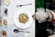 Cão de estimação participa de banquete com alimentos orgânicos durante a feira Interpets em Tóquio, Japão - 30/03/2017