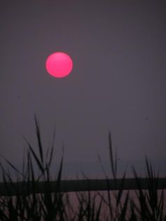 ✯My favorite color sun! Moon Pictures, Pretty Pictures, Cool Photos, Pink Nature, Flowers Nature, What A Wonderful World, Beautiful World, Pink Moon, Sun And Stars