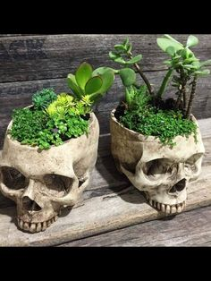 Skull Head Pot Vase Yatak odası – home accessories Skull Head, Skull Art, Casa Rock, Goth Home Decor, Gothic Garden, Creation Art, Skull Decor, Gothic House, House Plants