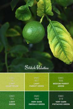 Green Color Names, Green Name, Green Paint Colors, Color Schemes Colour Palettes, Color Combos, Light Green Hex, Red Succulents, Color Combinations For Clothes, Green Colour Palette