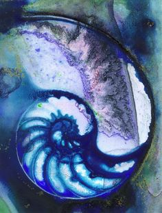NAUTILUS SHELL 55 by Kathy Morton Stanion