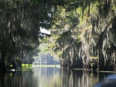 Government Ditch-Caddo Lake