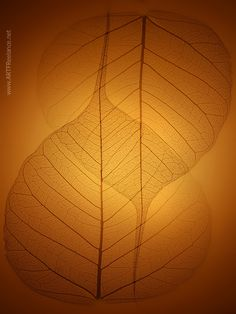 zen by luigi benedetti on Zen Yoga, Meditation, Zen Zen, Patterns In Nature, Textures Patterns, Luigi, Leaf Skeleton, Bodhi Tree, Elements And Principles