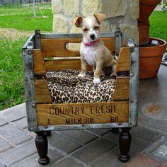 Decoración canina- Super Cachorros