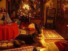 german shepherd (rogueryan) Tags: christmas xmas dog shepherd german germanshepherd weihnacht schaeferhund