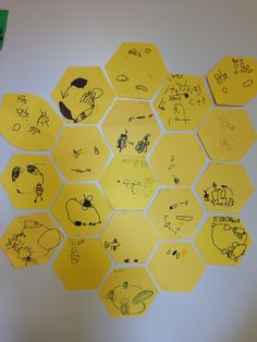 Preschool study of bee lifecycle. Children drew their version of the bee lifecycle on a hexagon and we built a honeycomb with all of them.