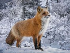 32Fox Photography