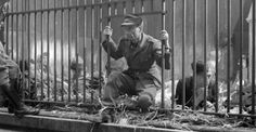 Zoo saved Jews in World War ll