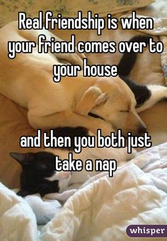 """Real friendship is when your friend comes over to your house and then you both just take a nap"""