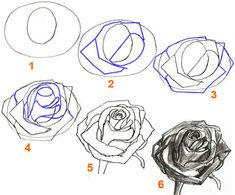 How To Draw A Petal | How to Draw a Rose, step by step | Pencil Drawing a Rose Flower