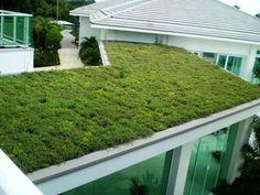 Telhados verdes: uma 'floresta' de vantagens #techosverdes