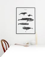 I'm so happy to announce that there is a new poster in the shop. The word 'kētos' in Greek, means a large ocean creature like a sea monster or whale. In this poster, five beautiful whale species are shaped from … Continue reading → Home Interior, Interior Design, Interior Styling, New Print, White Houses, Texture Painting, Cozy House, Interior Inspiration, Beautiful Homes