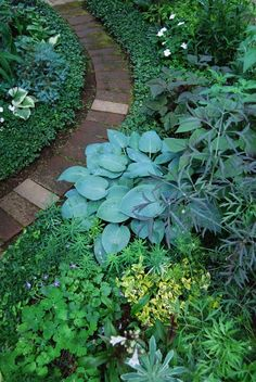 garden- love the blue hosta.