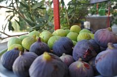 The figs are here... melt in the mouth sweet pleasure!