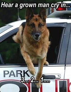 K9 gettin' the bad boys...and they do scream like little girls !!