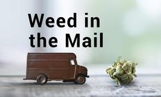 Legalization in most of the states has put the national parcel system in high alert. In a previous article we addressed the issue of traveling from a legal state into an illegal state with your marijuana products. Here's a look at the obvious. Blueberry Yum Yum, Cannabis News, Weed, Traveling, Recipes, Products, Viajes, Marijuana Plants